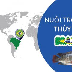 Ở Brazil, người ta nuôi thủy sản thế nào?