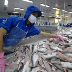 Các Bộ, ngành cùng đồng hành tháo gỡ khó khăn cho doanh nghiệp thủy sản