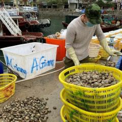 Quảng Ninh: Tập trung hỗ trợ tiêu thụ thủy sản cho người dân