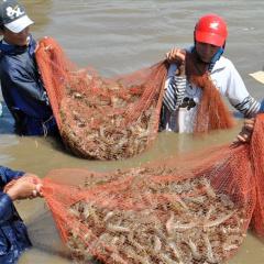 """Gỡ khó thủy sản """"hậu COVID-19"""": Doanh nghiệp như đi trên dây"""