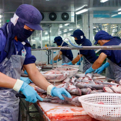 Xuất khẩu cá tra của Việt Nam có thể thiếu nguồn cung cho đến quý II/2022