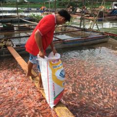 Vĩnh Long: Sản lượng nuôi trồng và khai thác thủy sản giảm trên 15%