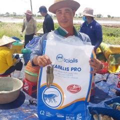 Giải pháp giảm giá thành sản xuất trong nuôi tôm