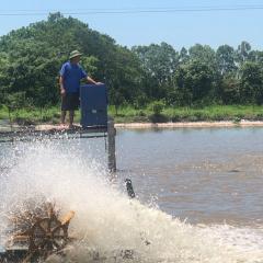 Hà Nội đẩy mạnh nuôi trồng thủy sản phục vụ thị trường Tết