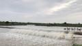 Diện tích nuôi thủy sản ở Nghệ An gần 21.000 hécta