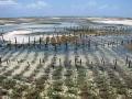 FAO: Kinh doanh thủy sản toàn cầu hướng đến kỷ lục mới