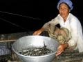 An Giang: Nghịch lý đầu mùa nước nổi: Ít cá, giá thấp