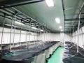 Sản lượng tôm nuôi của Ấn Độ năm 2013