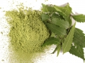 Hạt nano từ lá trà xanh và lá xoan trong điều trị bệnh gan tụy trên tôm