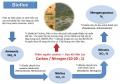 Nuôi tôm trên cạn:Mô hình tương lai