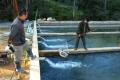Kon Tum: Tiềm năng phát triển cá nước lạnh