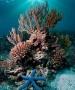 Cuba và Mỹ kết thúc nghiên cứu chung về rạn san hô tại Caribe
