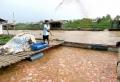 Đồng Tháp: Ước cả năm, diện tích nuôi thủy sản đạt 7.200ha