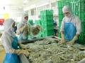GODACO: Xuất khẩu nghêu ổn định, tăng trưởng khả quan
