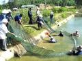 Quảng Nam: Nuôi thủy sản nước ngọt: Chưa phát huy hết tiềm năng