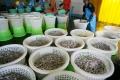 Thái Lan: Giá tôm nguyên liệu tăng do dịch bệnh EMS lan rộng