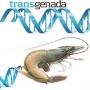 Công ty Công nghệ sinh học ở Arizona được trao tặng tài trợ của liên bang cho nghiên cứu chống lại dịch bệnh tôm