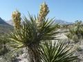 Sử dụng chất chiết từ cây Yucca trong nuôi trồng thủy sản