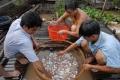Lãi 1 tỷ đồng mỗi năm từ cá heo nước ngọt