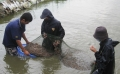 Chủ động phòng tránh dịch bệnh trên thủy sản