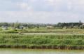 Vùng nuôi tôm sát cửa sông Bến Hải ngập trong nợ nần