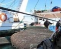 Argentina: Xuất khẩu thủy sản tăng