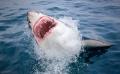 Sử dụng drone để cảnh báo cá mập