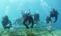 Dùng đá sinh học bảo vệ san hô