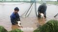 Những bất cập trong nuôi thủy sản nước ngọt