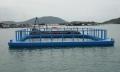Nghề nuôi biển phải chuyển mạnh sang quy mô lớn, công nghiệp