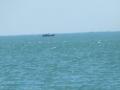 Dừng tìm kiếm tàu cá bị chìm dưới biển