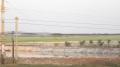 Tân Hưng: Nông dân vẫn ồ ạt đào ao nuôi cá