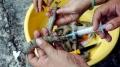 Kiên Giang: Bắt quả tang cơ sở thu mua thủy sản bơm tạp chất vào tôm nguyên liệu