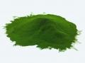 Bột tảo tăng khả năng chịu đựng khí độc trên tôm