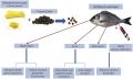Bột vỏ chanh làm tăng khả năng sinh trưởng và miễn dịch của cá