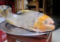 Chục triệu đồng một con cá Anh Vũ đầu vàng biếu Tết