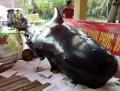 Cá 'Bà Chuông' nặng 800 kg