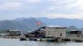 Hồi sinh các làng cá bè Khánh Hòa