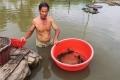 Cà Mau: Cá bống mú nuôi dễ, lời cao