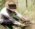 Cà Mau: Cá bống tượng rớt giá, thất thu hàng tỷ đồng