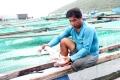 Vì sao hải sản ngày càng khó nuôi?