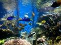 Ngắm cá cảnh có lợi cho sức khỏe