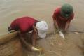 Thái Bình: Kết quả mô hình nuôi ghép cá chép V1 là chính
