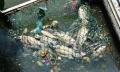 TP.HCM: Cá lại chết hàng loạt trên kênh Nhiêu Lộc