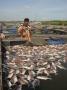 Người nuôi thủy sản điêu đứng vì môi trường ô nhiễm
