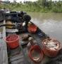 Bác tin cá điêu hồng nhiễm chất cấm