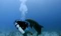 Cá heo đòi giao phối với người