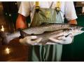Cá hồi biến đổi gene lần đầu tiên được bán