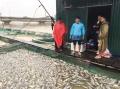 70 tấn cá lồng nuôi ở Thừa Thiên - Huế chết hàng loạt