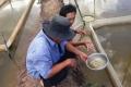 Giá bán một số loài thủy sản ở Cần Thơ, Cà Mau